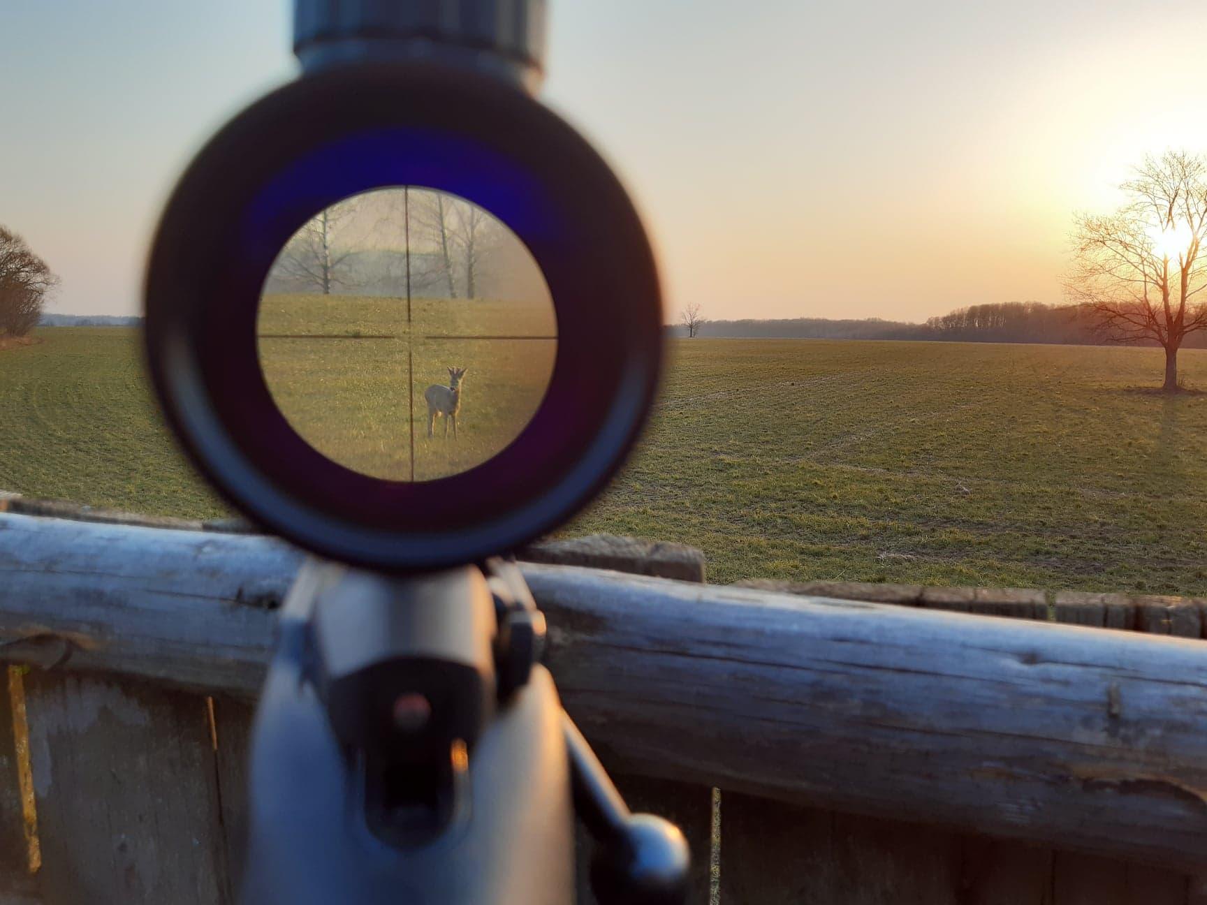 Dėl besniegės žiemos medžiotojai nebus baudžiami už neatliktą žvėrių apskaitą